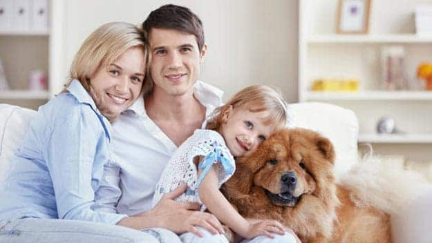 Wills & Trusts dog-young-family Direct Wills Bromyard